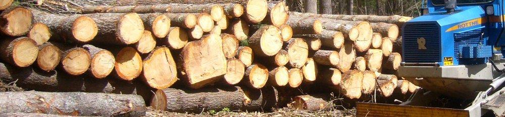 il-legno